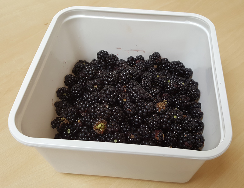 Chyvarhas blackberries1.jpg